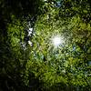 Beech canopy in the forest reserve, Sitzwiesen von Darmstadt-Arheilgen, Kranichstein, in Hessen, Germany. © Daniel Rosengren / FZS