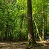 Two boys playing in a forest reserve, Hegbachaue bei Messel, Koberstadt, in Hessen, Germany. © Daniel Rosengren / FZS