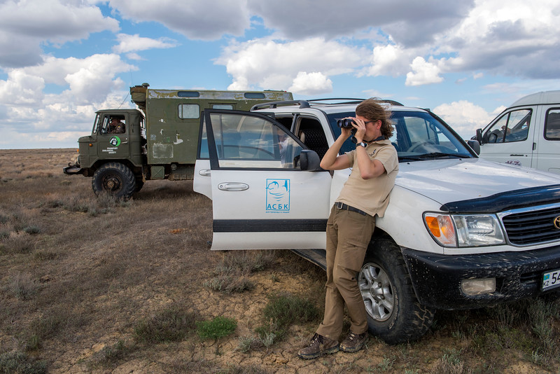 FZS project manager Steffen Zuther scanning the horizon for Saigas in the Altyn Dala reserve, Central Kazakhstan. © Daniel Rosengren / FZS