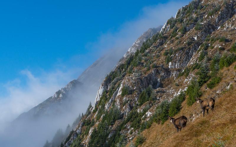 Carpathian Mountains - landscape and project work