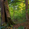 An old growth Beech forest in Uzhanskiy National Nature Park, Ukraine. © Daniel Rosengren / FZS