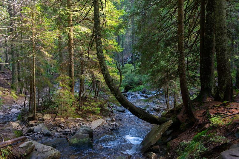 A stream in the Carpathian Natural Nature Park, Ukraine. © Daniel Rosengren / FZS