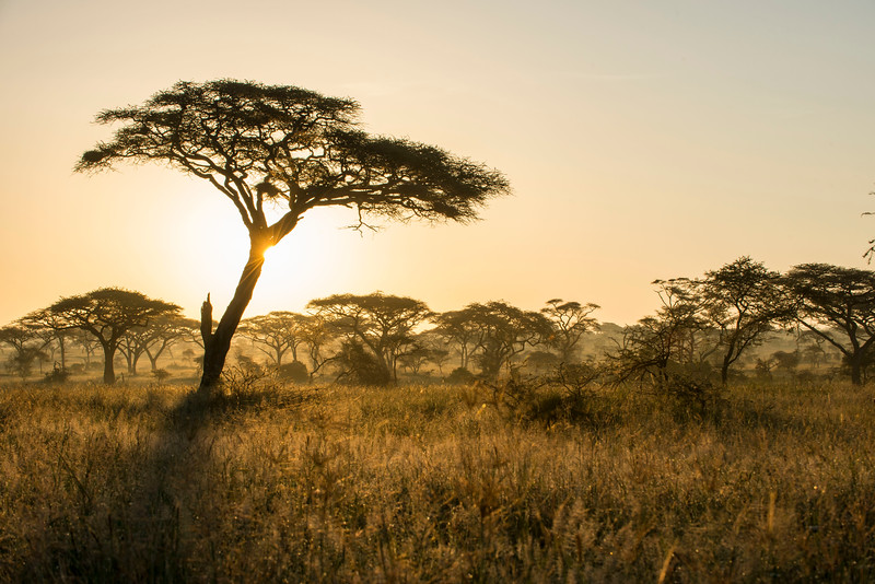 Sunrise in the Serengeti NP, Tanzania. © Daniel Rosengren