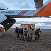 A box with a Kulan being unloaded from the helicopter at Alibi, Altyn Dala NP, Kazakhstan. © Daniel Rosengren