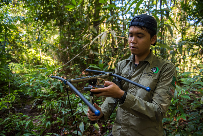 Andri Safrianto tracking an orangutan with telemetry equipment and taking out the direction with his GPS. At the Sumatran Orangutan Rescue Centre, near Bukit Tigapuluh, Sumatra, Indonesia. © Daniel Rosengren