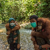 Young Orangutans, Suro (right), carried by trainer Kresno Handrianto (who tragically died a few days later) and Amoy, carried by Siti Fatimatazzahra, after a day out on Jungle School to learn how to survive in freedom. Orangutans are taken care of from illegal lives in captivity to be set free in Bukit Tigapuluh. At the Field station at Open Orangutan Sanctuary, near Bukit Tigapuluh, Sumatra, Indonesia. © Daniel Rosengren