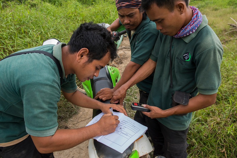 The wildlife Protection Unit (from left: Adi Octaperi, Mardani and Sanusi) taking data in the field near Bukit Tigapuluh, Sumatra, Indonesia. © Daniel Rosengren