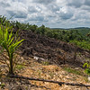 A recently burnt area to make space for a oil palm plantation. Near Bukit Tigapuluh, Sumatra, Indonesia. © Daniel Rosengren