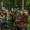 Young Orangutans (from left: Suro, Dora and Amoy) out on Jungle School to learn how to survive in freedom. Orangutans are taken care of from illegal lives in captivity to be set free in Bukit Tigapuluh. The trainers are from left: Fabianus Sinaga, Andri Safrianto (orangutan technician), and Kresno Handrianto (tragically died a few days later). At the Field station at Open Orangutan Sanctuary, near Bukit Tigapuluh, Sumatra, Indonesia. © Daniel Rosengren