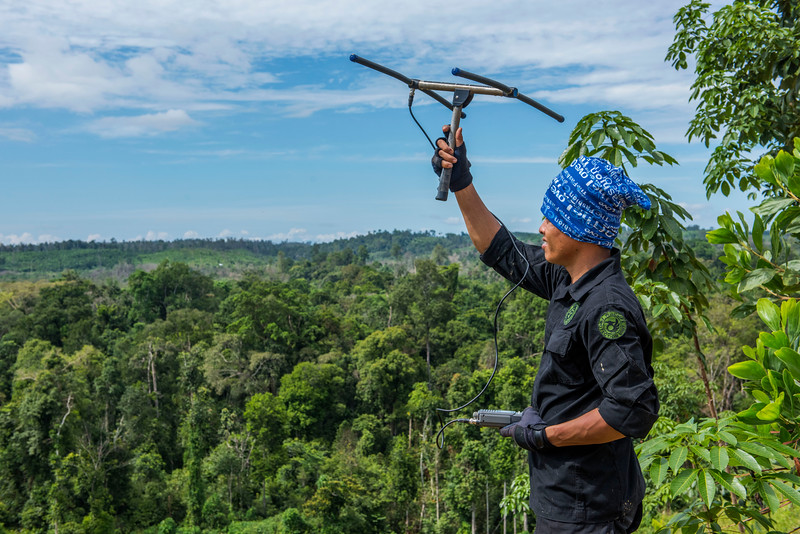 Sakban, forking for the Wildlife Pritection Unit, tracking elephants by telemiery. Near Bukit Tigapuluh NP, Sumatra, Indonesia. © Daniel Rosengren