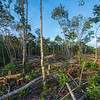 Forest in the Bukit Tigapuluh area that has been felled to make space for palm oil plantation. Sumatra, Indonesia. © Daniel Rosengren