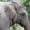 Sumatra Elephant Project