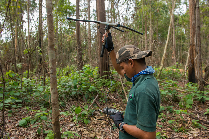 A member of the elephant team, Sakban, using telemetry equipment to track the elephants whereabouts. Near Bukit Tigapuluh, Sumatra, Indonesia. © Daniel Rosengren