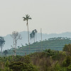 About a year ago this was all rain forest. Now it is gone and will soon be a rubber tree plantation. Near Bukit Tigapuluh, Sumatra, Indonesia. © Daniel Rosengren