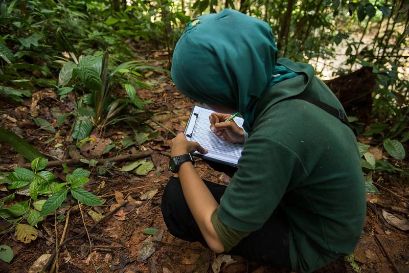 Siti Fatimatazzahra, orangutan trainer, taking regular notes on the behavoiur of the orangutans out on jungle school. At the Field station at Open Orangutan Sanctuary, near Bukit Tigapuluh, Sumatra, Indonesia. © Daniel Rosengren