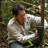 Juvenal Silva checking a camera trap near Yomibato, Manu NP, Peru. © Daniel Rosengren