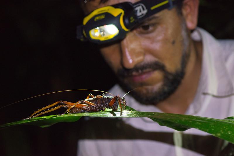 Claus Garcia and a giant cricket in Yaguas, Peru. © Daniel Rosengren