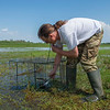 Pavel Pinchuk collecting Wood Sandpipers from a wader traps. The birds will be provided with rings for research and then released again. In the River Pripyat water system, Turov area, Polesie, Belarus. © Daniel Rosengren