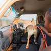 A dog handler with a dog on the daily training session. Bushmeat, ammunition or animals parts used in illegal trade are hidden in a car and the dogs are trained to sniff them out. When the item has been found, the dog sits down. These dogs are used for anti poaching purposes and are trained to sniff out for example rhino horn, pangolin scales and ammunition. North Luangwa NP. Zambia. © Daniel Rosengren