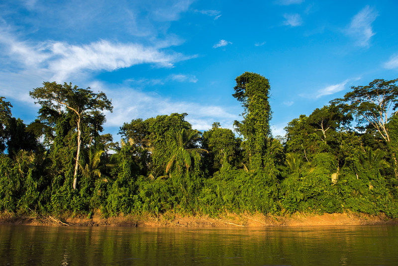 The rainforest along Manu River, Manu NP, Peru. © Daniel Rosengren