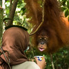 Riris Prawesti, at the SORC station is trying to lure (with juice) an orangutan (Bumbu Nigahatua) down low, so they can treat a wound on her neck. © Daniel Rosengren