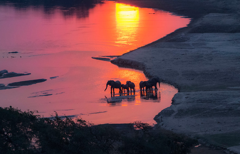 A group of elephants seen in a river at sunset. Photographed from the Husky plane in North Luangwa National Park, Zambia. © Daniel Rosengren