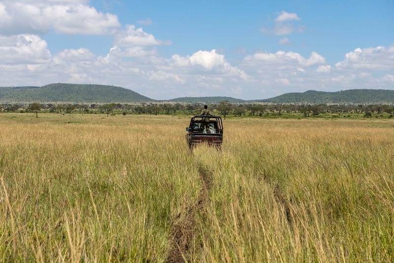 Moru rhino Rangers searching for rhinos. Moru, Serengeti, Tanzania. © Daniel Rosengren