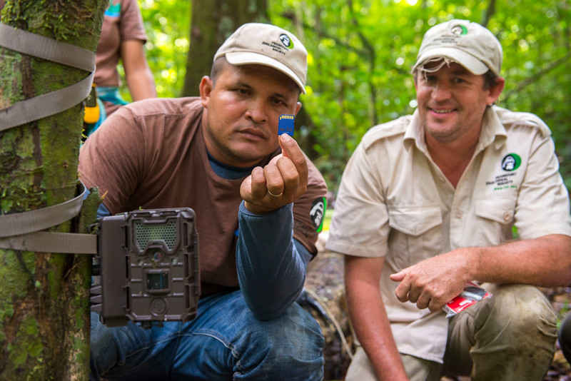 PAC rangers Francisco Gomes and FZS project manager Thadaigh Baggallay changing memory cards of a camera trap in Kanuku Mountains Protected Area, Guyana. © Daniel Rosengren