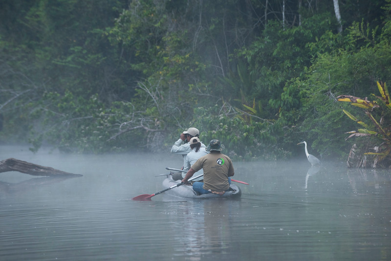 Joel Mendoza (front of canoe), Keyli Huamaní (middle) and Germán Sebastián paddeling on Cocha Salvador conducting the Giant Otter census. Manu NP, Peru. Cocoi heron seen to the right. © Daniel Rosengren