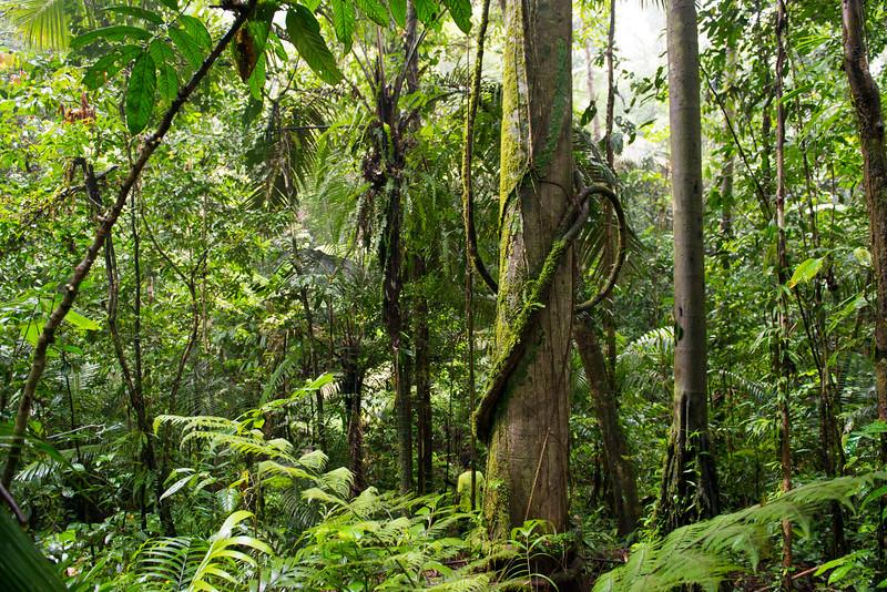 The rainforest of Yaguas, Peru. © Daniel Rosengren