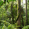 The rainforest of Yaguas, Peru. © Daniel Rosengren / FZS