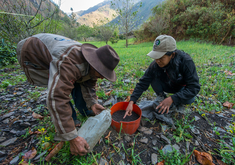 A local farmer in Patanmarca, Domingo Davalos. He gets support and training from FZS on how to farm Physalis. Peru. Here he is watering tiny physalis seedlings. © Daniel Rosengren