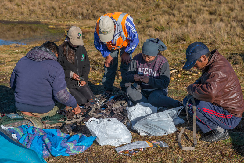 The FZS team preparing camera traps to be put up in the Manu NP highlands area to survey the spectacled bears. Peru. © Daniel Rosengren