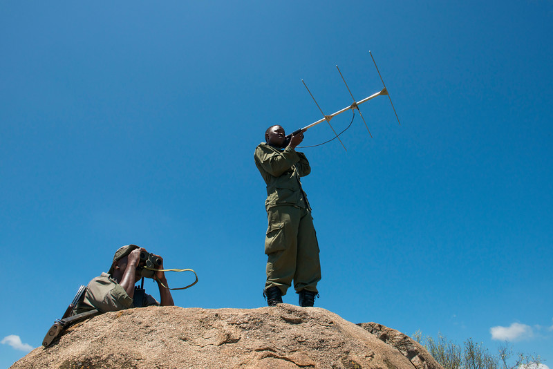 Two Moru rhino Rangers scanning and searching for rhinos. Radio transmitters have been put in the rhinos' horns that can be tracked with telemetry equipment. Moru, Serengeti, Tanzania. © Daniel Rosengren