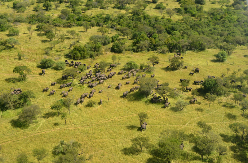 Aerial Elephants