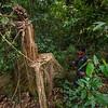 Aben, the leader of the Patrol Team, has found an illegally felled tree near the Open Orangutan Sanctuary, near Bukit Tigapuluh, Sumatra, Indonesia. © Daniel Rosengren / FZS