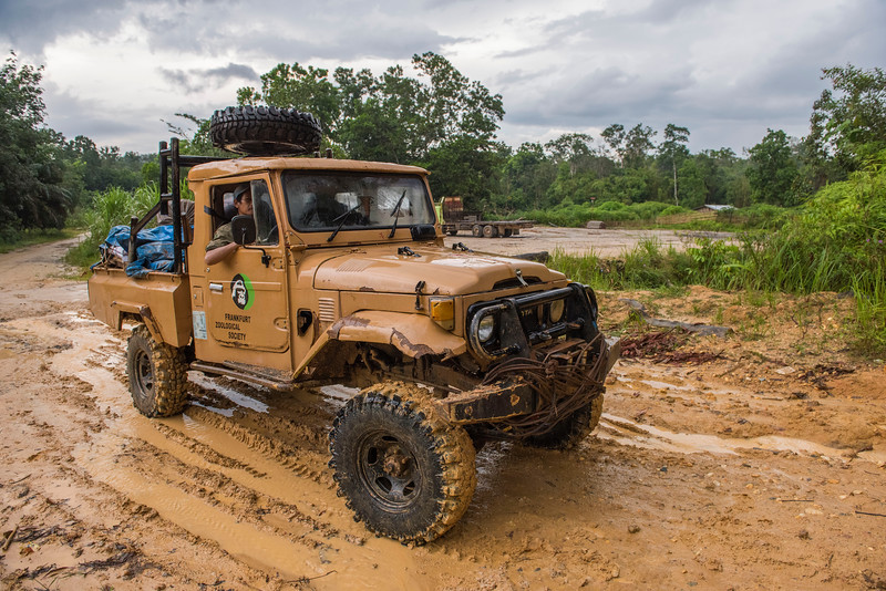 Driving to the Sumatran Orangutan Rescue Centre station during or after rains can be very difficult. The mud is very slippery and deep. A lot of digging, winching and time is required on top of skilful driving. Near Bukit Tigapuluh, Sumatra, Indonesia. © Daniel Rosengren / FZS