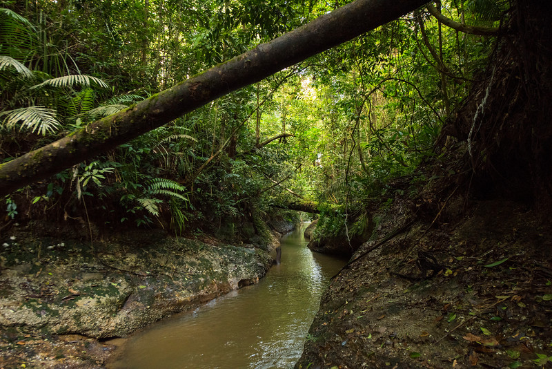A small river at the Sumatran Orangutan Rescue Centre, near Bukit Tigapuluh, Sumatra, Indonesia. © Daniel Rosengren / FZS