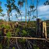 Alexander Mossbrucker standing on a rubber tree forest clearing near Bukit Tigapuluh, Sumatra, Indonesia. © Daniel Rosengren / FZS
