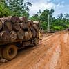 Two trucks transporting logs near Bukit Tigapuluh, Sumatra, Indonesia. © Daniel Rosengren / FZS
