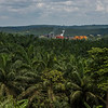 Oil palms as far as the eye can see and an oil extracting factory in the middle. Palm oil plantations are replacing important natural habitats all over Sumatra thretening species like Orangutans, Tigers, Elephants etc. Sumatra, Indonesia. © Daniel Rosengren / FZS