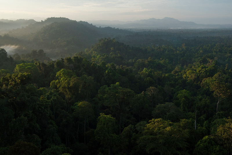 The view of Bukit Tigapuluh NP from a high point near the Sumatran Orangutan Rescue Centre, near Bukit Tigapuluh, Sumatra, Indonesia. © Daniel Rosengren / FZS