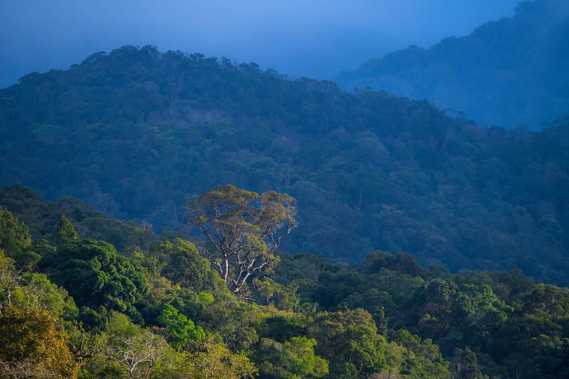 The forest of Kon Ka Kinh NP, Vietnam. @ Daniel Rosengren / FZS