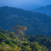 The forest of Kon Ka Kinh NP, Vietnam. @ Daniel Rosengren / FZS