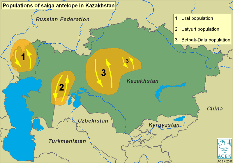 Saiga distribution map<br /> © Steffen Zuther
