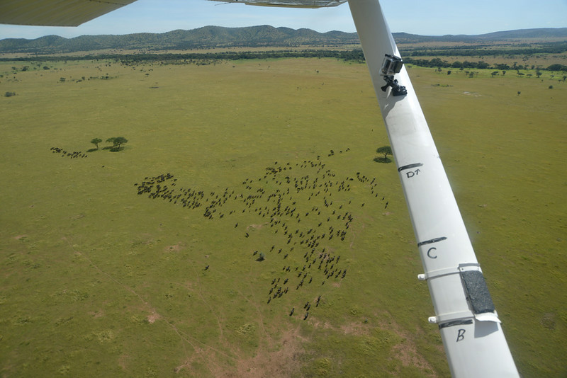 Aerial buffaloes