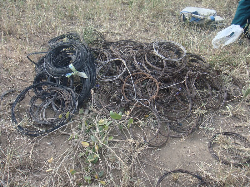 Serengeti De-Snaring Project, 2017 / Confiscated wire snares