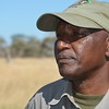 Serengeti De-Snaring Project,  2017 / Abrahame Sedyai leads the Serengeti de-snaring team