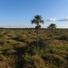 An aerial photo of the Pampas del Heath, Bahuaja Sonene NP, Peru. © Daniel Rosengren / FZS