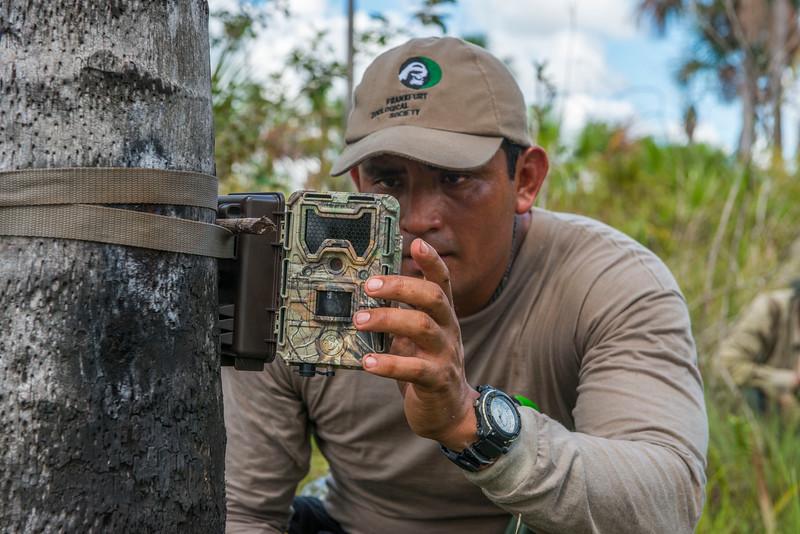 Eddy Torres checking a camera trap. Pampas del Heath, Bahuaja Sonene NP, Peru. © Daniel Rosengren / FZS